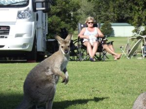 Dearne and Wallaby