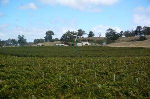 Vineyards in The Barossa