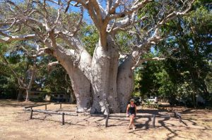 Dearne beside Boab Tree In Wyndham Holiday Park