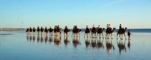 A camel train on Cable Bay beach