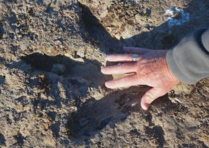 An appreciation of the size of the dinosaur print at Roebuck Bay