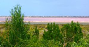 A good shot of the Pink Lake at Port Gregory
