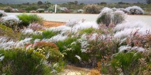 Wildflowers in the Kalbarri National Park
