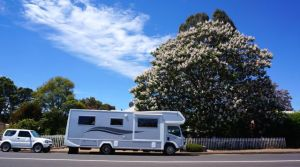 A shot of the motorhome beside a giant Paulownia tree at Nannup
