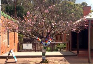 A blossom tree in Bridgetowns main street 'dressed' with a knitted cover. Very arty.