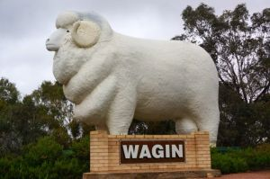 Bart, the giant ram at Wagin