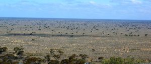 The Nullabor Plain as far as the eye can see - the scenery was amazing.