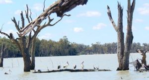 Wildlife on the shore of Lake Benanee