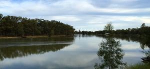 The stunning Murray River from our motorhome at Merbein Common