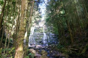 Nelson Falls just off the Lyell Highway