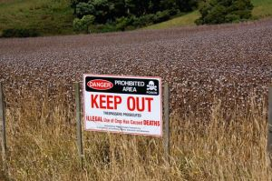 Tasmania's opium crop is well protected by signage and security staff